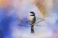 Winter Morning Chickadee Fine Art Print