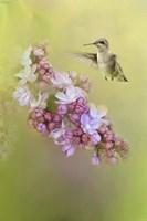 Chasing Lilacs Fine Art Print
