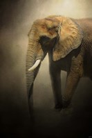 The Elephant Emerges Fine Art Print