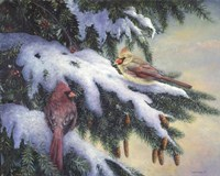 Winter Cardinals Fine Art Print