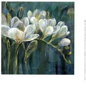 Freesia Blues II Fine Art Print