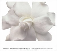 Gardenia In Bloom Fine Art Print