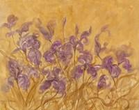 Irises I Framed Print