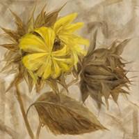Sunflower IV Framed Print