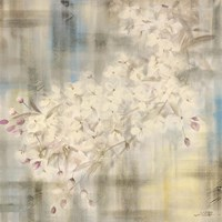 White Cherry Blossom IV Framed Print