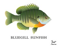 Bluegill Sunfish Fine Art Print