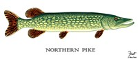 Northern Pike Fine Art Print