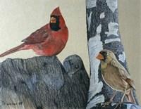 Two Cardinals Fine Art Print