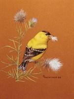 Bird - Red Background Fine Art Print