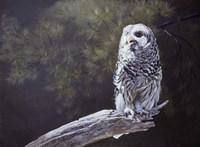 Feathered Alarm Clock Fine Art Print