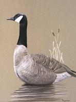 Lone Goose Fine Art Print