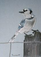 Bird On A Post Fine Art Print