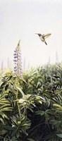Hummingbird 2 Fine Art Print