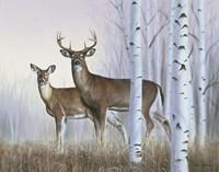 Deer In Birch Woods Fine Art Print