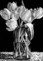Nine Tulips Fine Art Print
