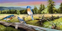 Bluebird Meadow Fine Art Print