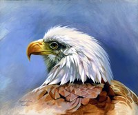 Eagle Portrait Fine Art Print