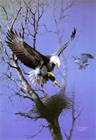Nesting Place Fine Art Print
