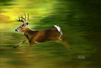 Running Deer Fine Art Print