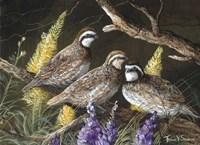 Bobwhite Trio 1 Fine Art Print