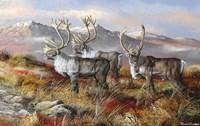 Cold Alaskan Ridge Fine Art Print