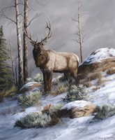 Cold Ridge Watcher Fine Art Print