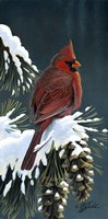 Winter Cardinal Fine Art Print