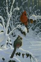 Cardinals & Brambles Fine Art Print