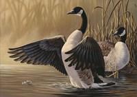 1994 Canada Geese Fine Art Print