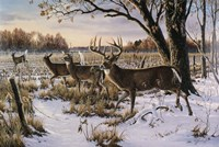 Cautious Crossing - Whitetails Framed Print