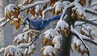 Changing Season Fine Art Print