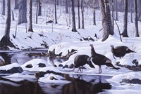 Hardwood Creek - Wild Turkeys Fine Art Print