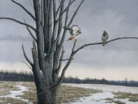 Old Elm & Redtails Fine Art Print