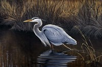 Making Strides - Great Blue Heron Fine Art Print