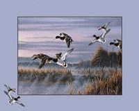 Ducks In Flight 1 Framed Print
