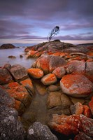 Binalong Bay Fine Art Print