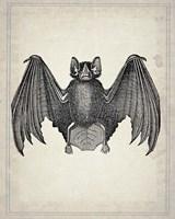 Bats 2 Framed Print