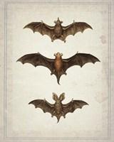 Bats Framed Print