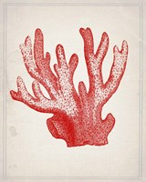 Red Coral 3 Framed Print