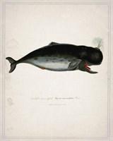 Whale 3 Framed Print