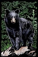Black Bear 4 Framed Print