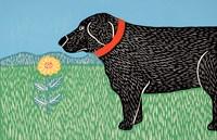 Nature Dog Good Dog Fine Art Print