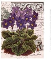 Primrose Posies 2 Fine Art Print