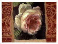 Classic White Rose Framed Print