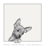 Sweet Chihuahua Fine Art Print