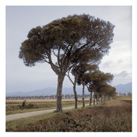 Tuscan Fatorria Strada No. 1 Framed Print