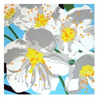 Spring has Sprung Fine Art Print