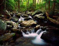 LeConte Creek, Great Smoky Mountains National Park Fine Art Print