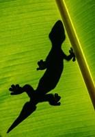 Leopard Gecko, Tortuguero, Costa Rica Fine Art Print