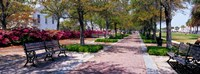 Waterfront Park in Charleston, SC Fine Art Print